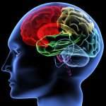 Having A Healthier Brain With Simple Tips And Tact